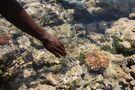 cercando coralli... di Chiara Lenzo