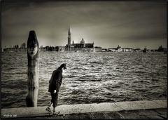 Cercando Venezia