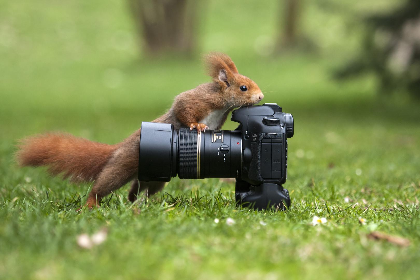 Cercasi Fotografo