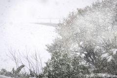 Cercavano il miglio gli uccelli ed erano subito di neve; così le parole...        1