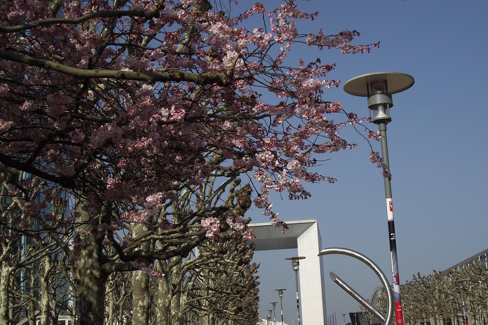cerisiers sur la défense