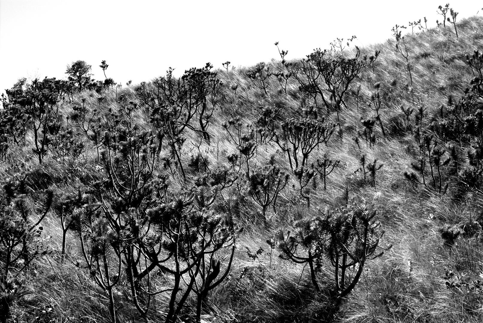 Cerrado fields in B&W