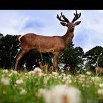 cervi al notthingham park