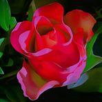 c'est la rose