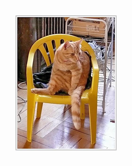 ... chair baby with 'Johanniskraut' (Jan)... a sitting in Fredrick's improvised studio