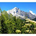 Chamonix, l'Aiguille Verte et les Drus