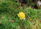 champignon special