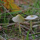 Champignons de sous bois