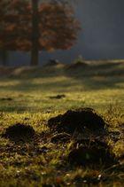 champs d'automne
