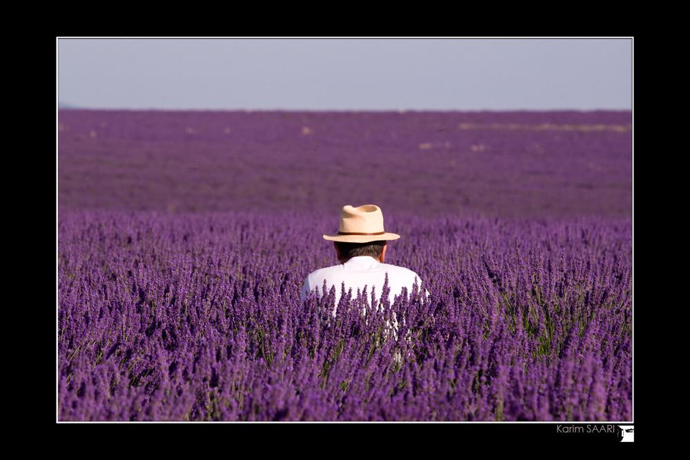 champs de lavande en provence  ~ Karim SAARI ©