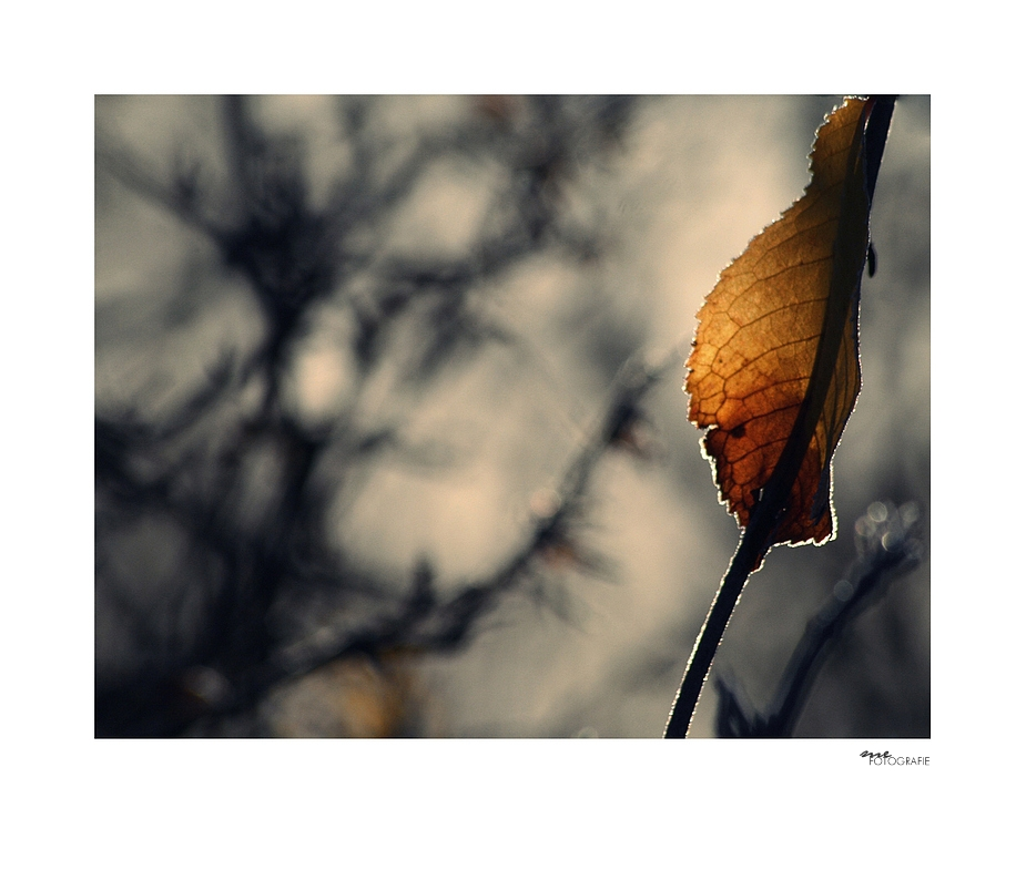 .change.
