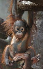 Changi - Zoo Krefeld