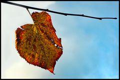 chanson d automne...
