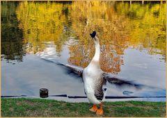 chanson d automne....