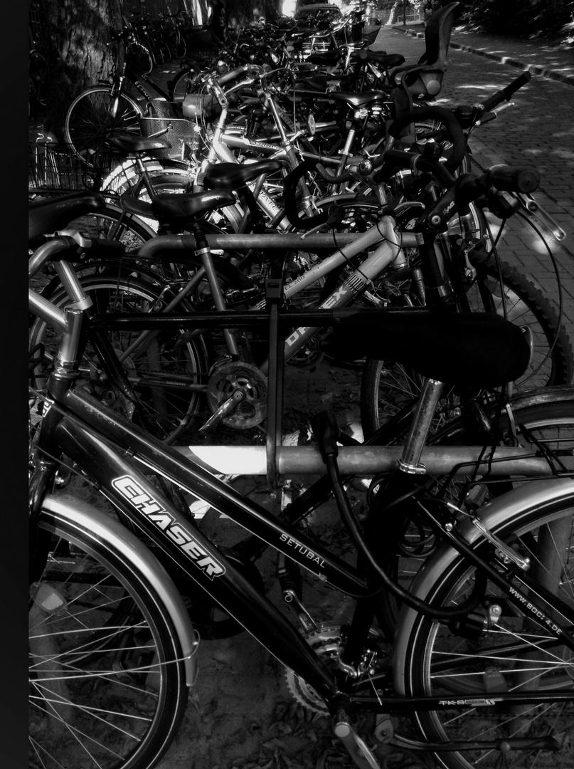 Chaos auf zwei Rädern