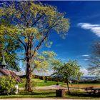 Chapel, tree & blue sky