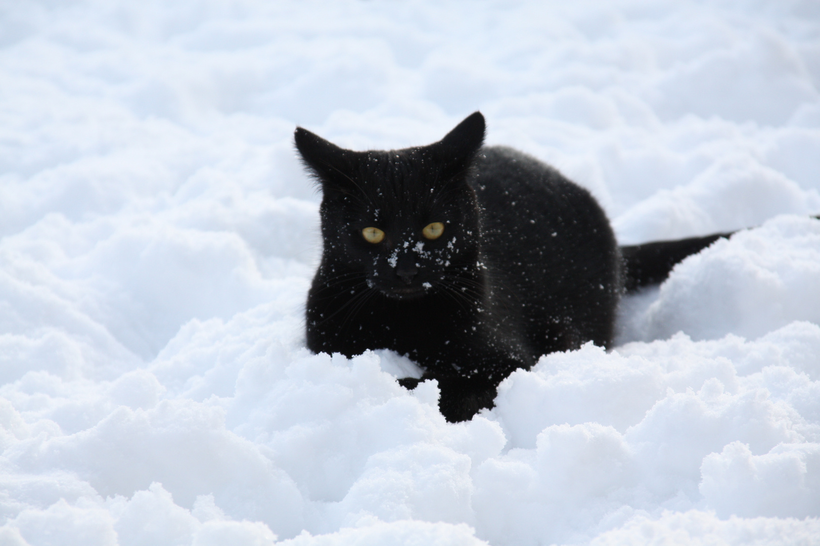 Chapplin das erste mal im Schnee