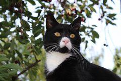 Charakter Cat