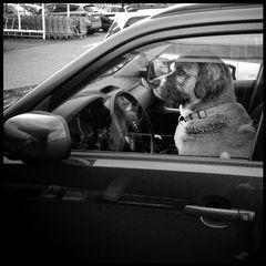 charismatic driver