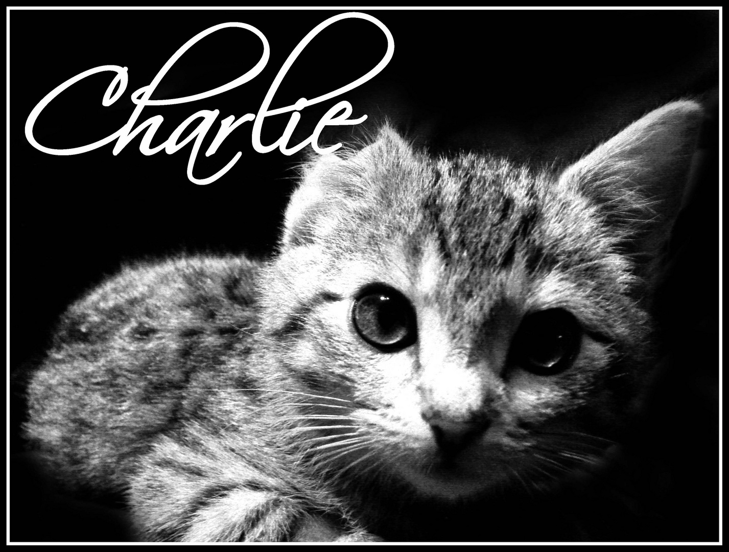 - Charlie -