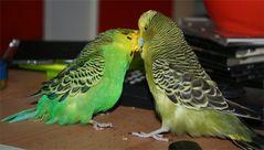 Charly und Sanji