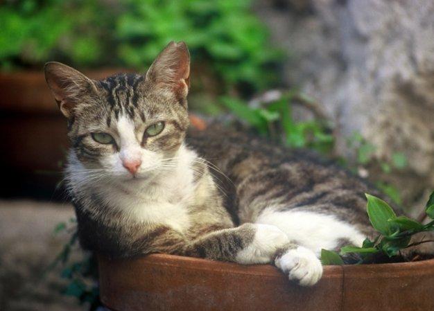 Chat à Peillon