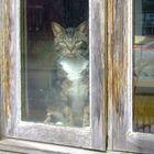 chat bien triste