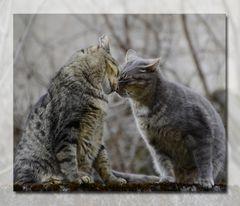 * chat c'est de l'amour * !!!