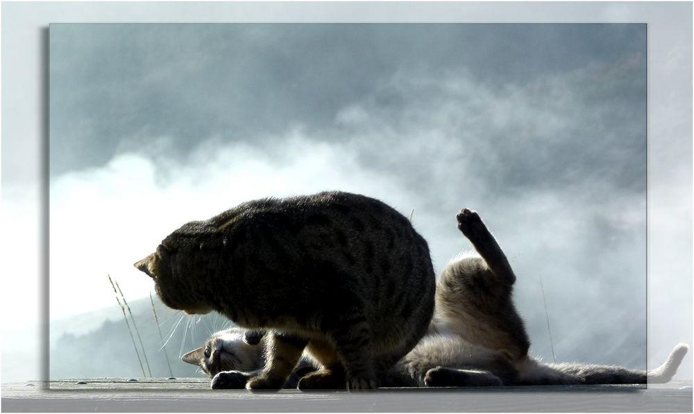 * chat,  c'est renversant *
