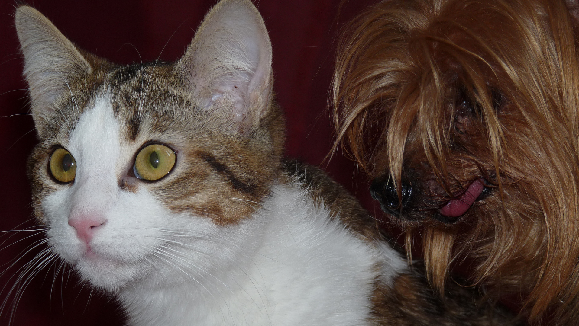 CHAT - CHIEN