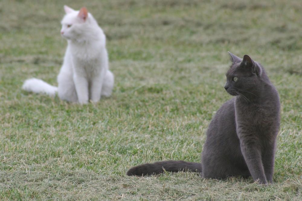 Chat et son mime!