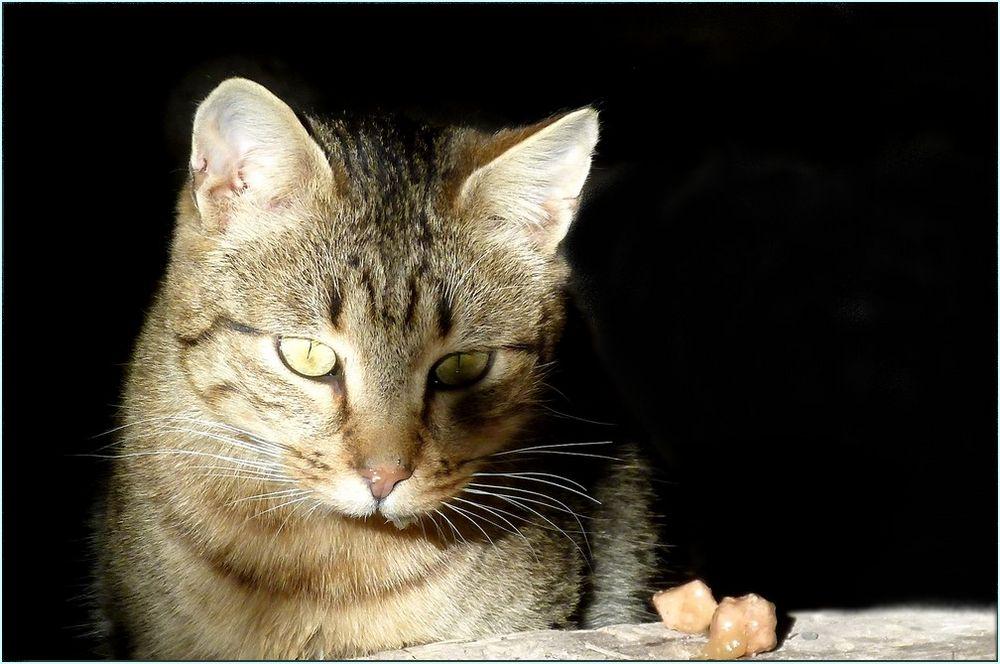 *chat pense*