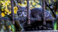 Chat Prisonnier