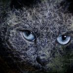 Chat.....tapisserie