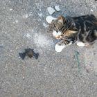 Chauve-souris et chat...