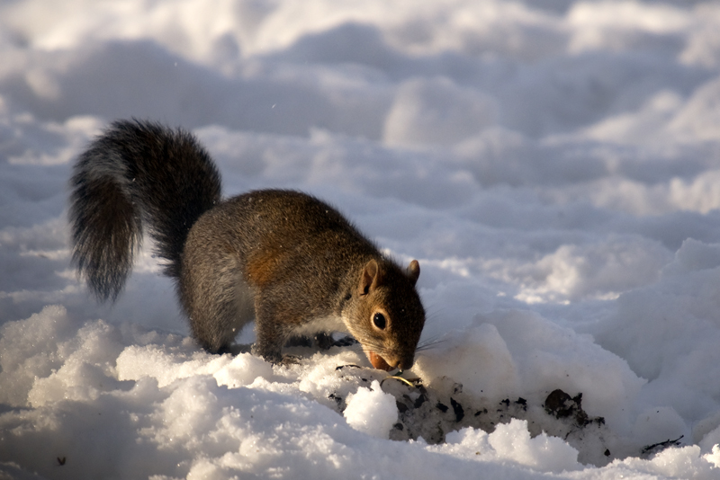 Che fatica con sta neve!