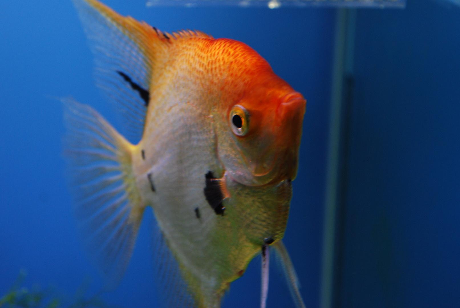 Che noia dentro l' acquario....2