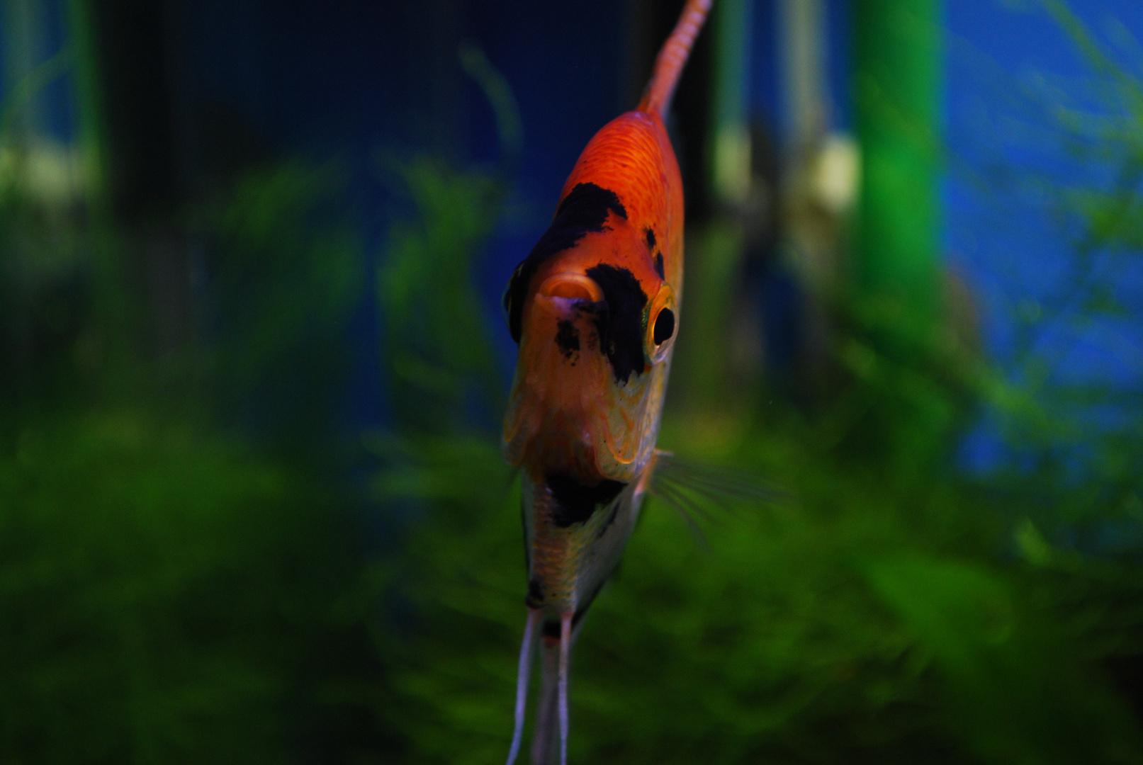 Che noia dentro l' acquario...3
