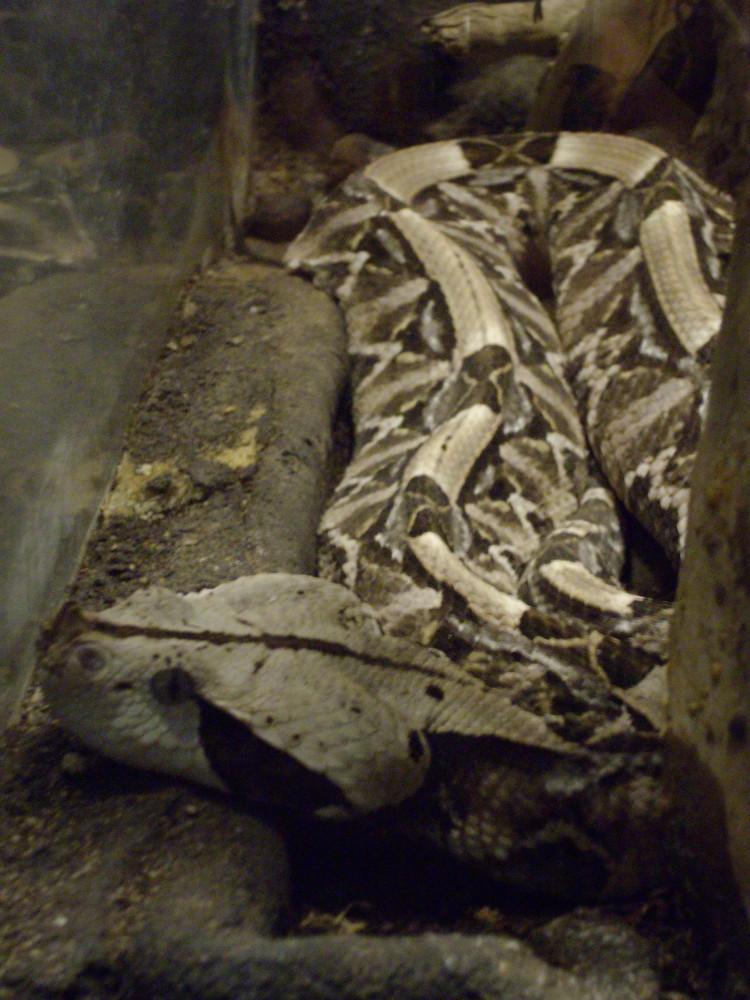 che spettacolo di serpente