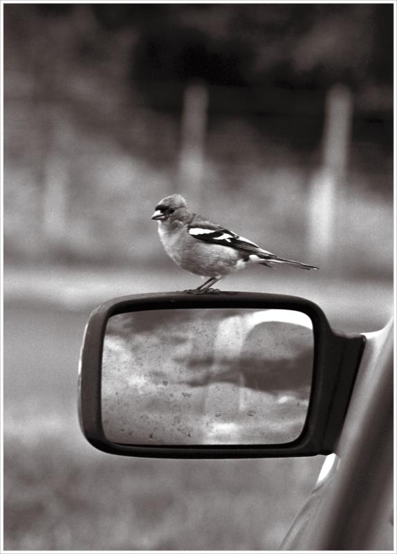 Cheeky Wee Birdy
