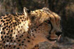 Cheetab