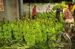 Chef der Bananen