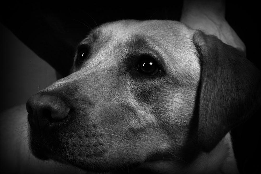 Chef Hund 2