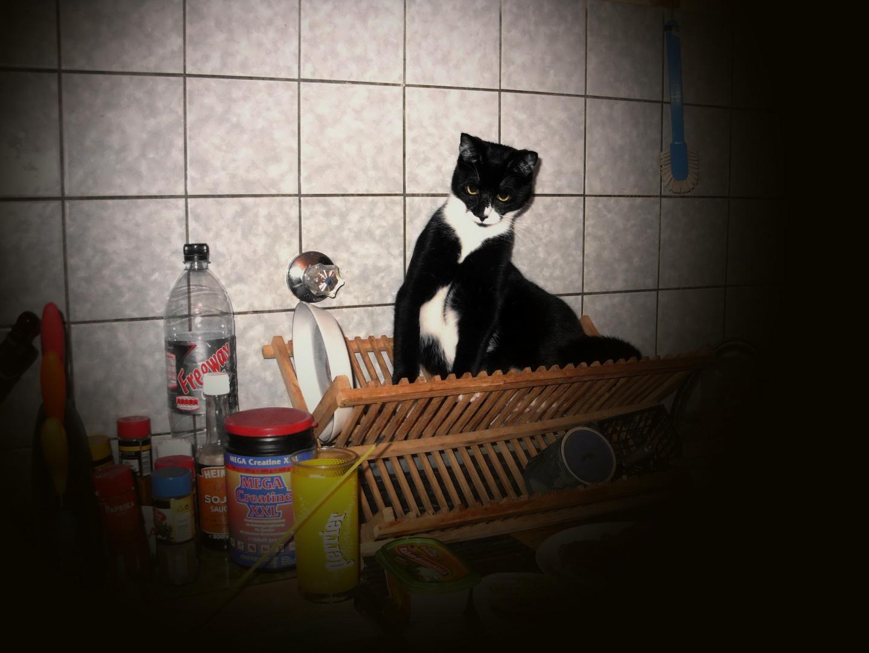 """""""Chefköchin"""" - hat gerade den Gesundheitspass gemacht..."""