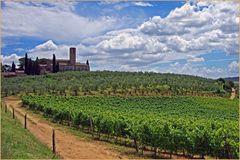 chemin de terre serpentant  entre vignes et oliviers....