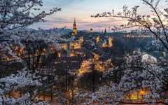 Cherry Blossom & City Lights