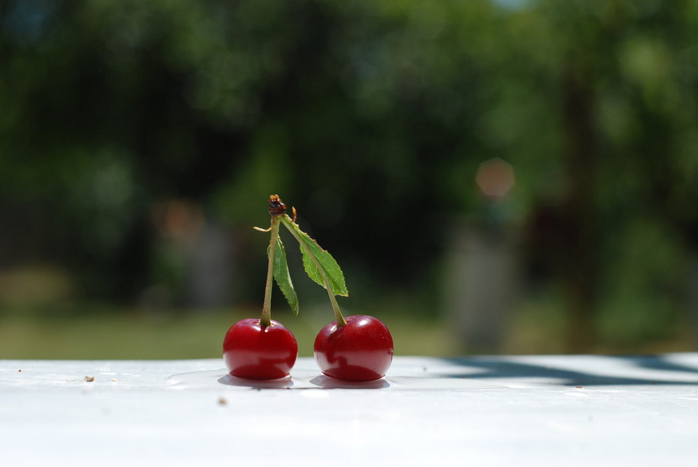 cherry earring and bread-crumbs