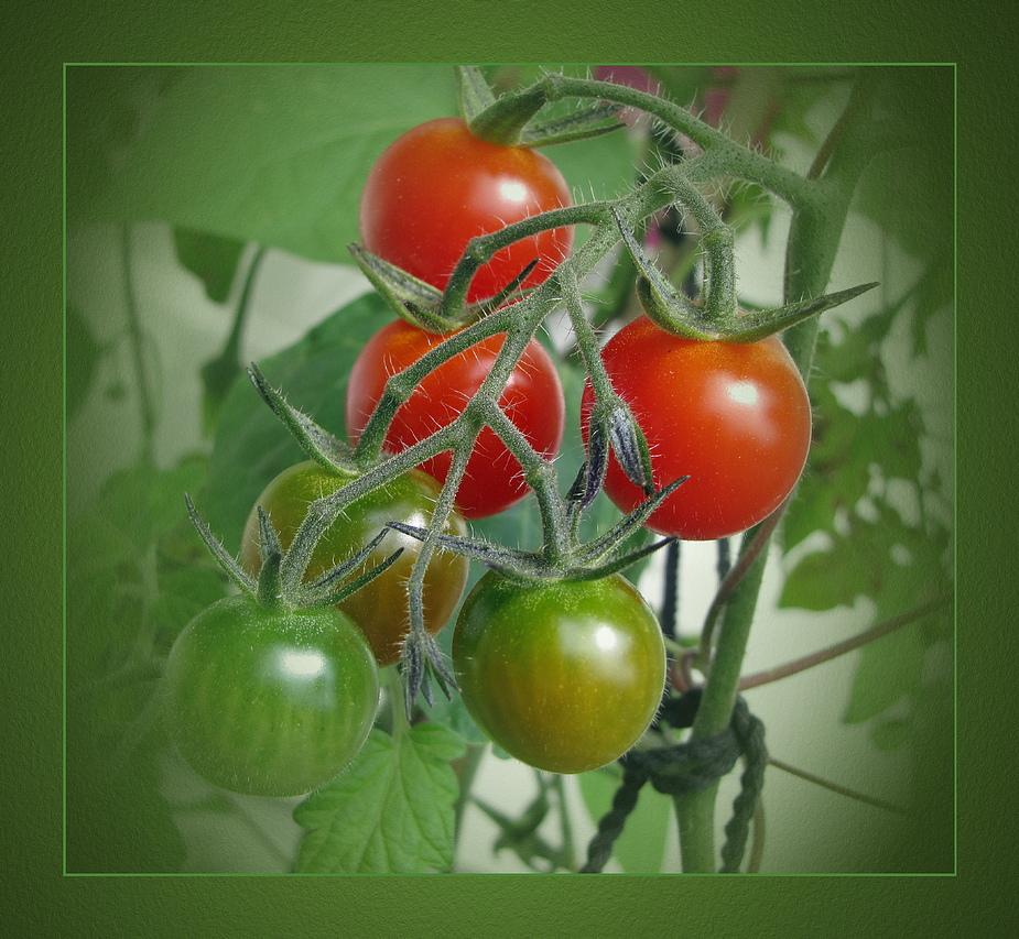 Cherry-Tomaten ...