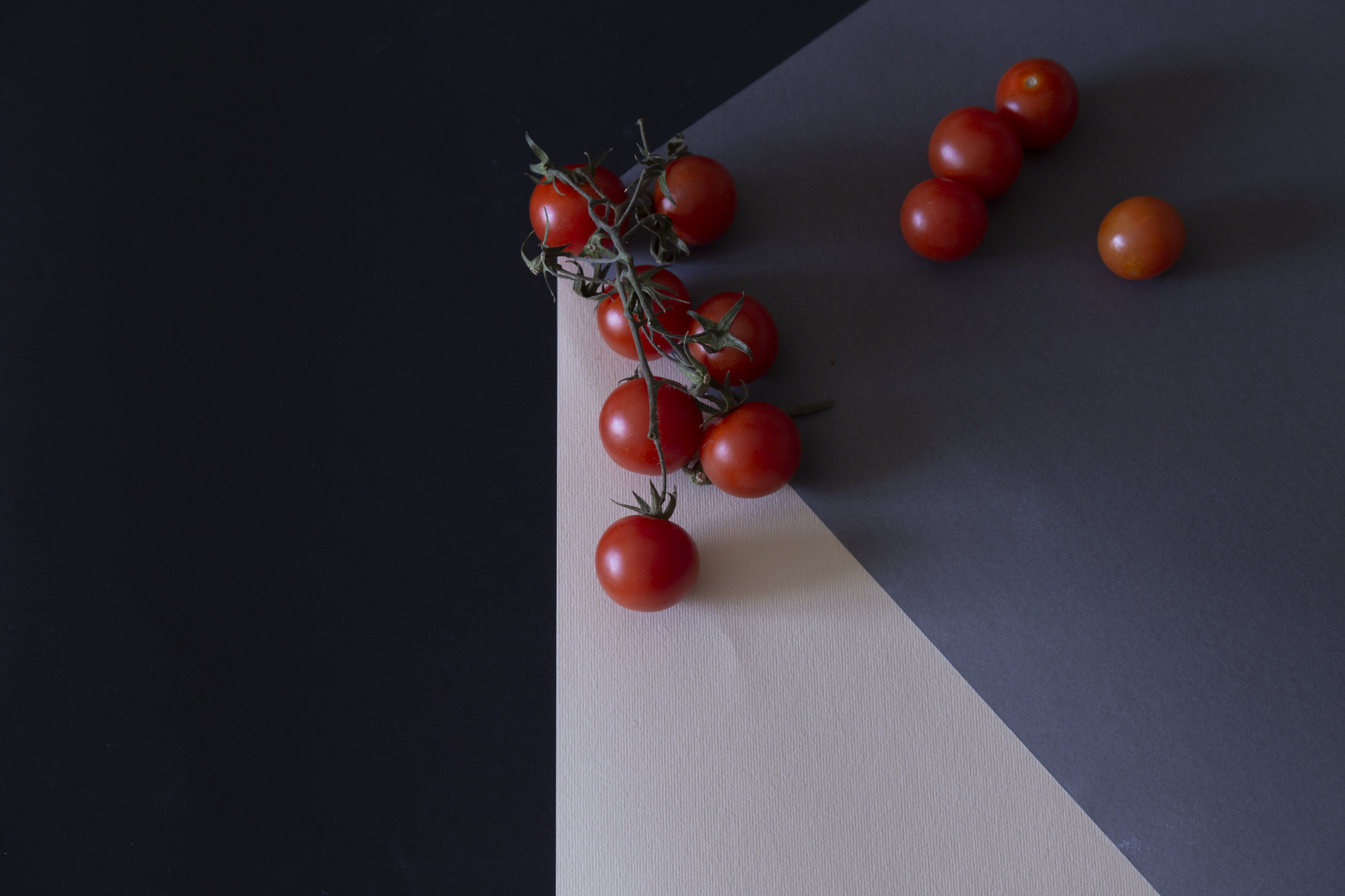 cherry tomatoes climbing in a rope
