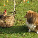 Chessie und das Huhn